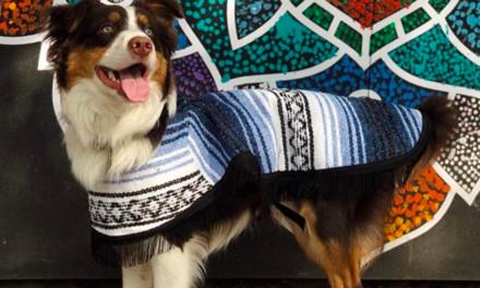 Jorongos, una moda canina