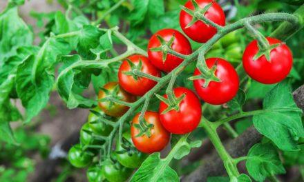 Produce y come tus alimentos: Huertos Urbanos.