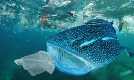 Ya no existe en el planeta ningún ecosistema marino que la contaminación no haya afectado
