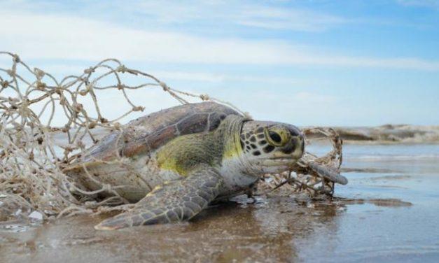 Las tortugas marinas son uno de los animales más majestuosos que existen en los océanos