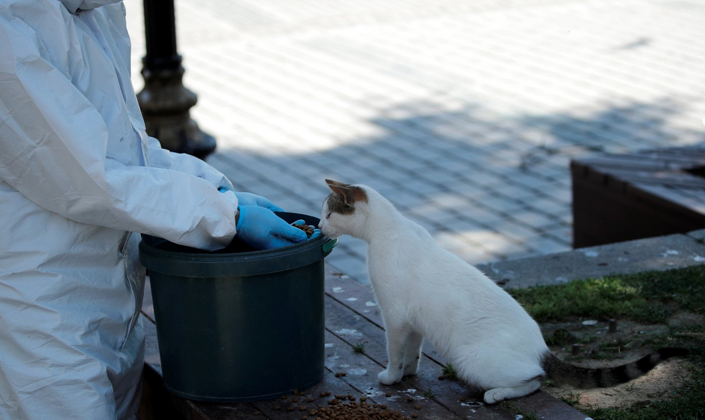 Estambul no se olvida de sus gatitos por Covid-19