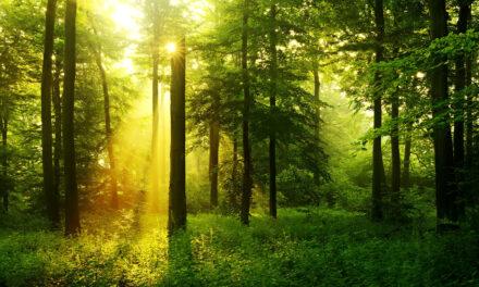 La importancia de nuestros bosques