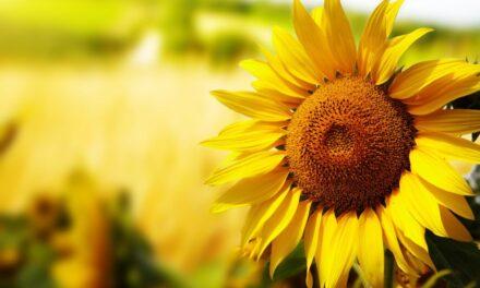Las Plantas, naturaleza en evolución