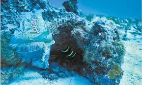 Encuentran en costas mexicanas basura masiva de material plástico de Estados Unidos, Centro América y Asia.