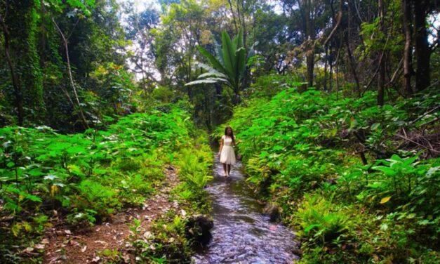Makario y la Pacharama lanzan tema musical alusivo al «Río Cupatitzio»