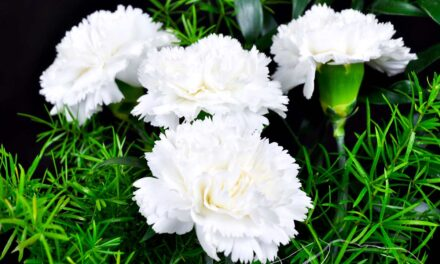 ¿Ya sabes qué flores regalarle a tu ex?