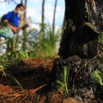 Reforestación Semana de Cultura Laboral Uruapan 2021